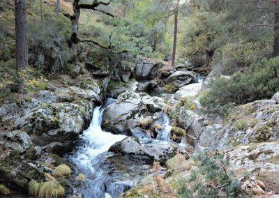 Madrid: Ruta del tejo milenario