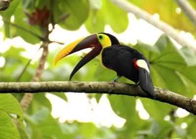 Costa Rica: ¡Qué tuanis!